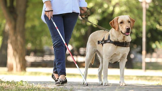 guide-dog-myths